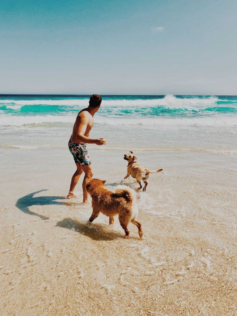 venic florida dog beach